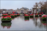 Amsterdam Tulip Festival 02 by corngrowth, photography->flowers gallery