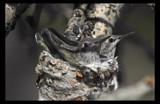 7 DAYS by garrettparkinson, Photography->Birds gallery