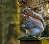 Noisy Grey by biffobear, photography->animals gallery
