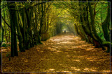 Stroll Through 'Tunnel' With Filtered Light by corngrowth, photography->landscape gallery