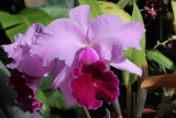 Image: Orchid