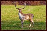Deer Friends (Bonus) by corngrowth, Photography->Animals gallery