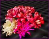 Floral Aurora by Dunstickin, photography->manipulation gallery