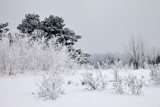 Frozen Solitude by Silvanus, photography->landscape gallery