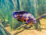 Oscar by Pistos, photography->animals gallery