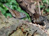 Two's company by biffobear, photography->birds gallery