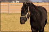 Missouri Dreaming by Jimbobedsel, Photography->Animals gallery