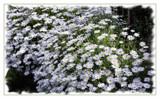 Daisy Daisy Daisy . . by LynEve, photography->flowers gallery
