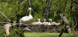 Hidden Treasure by tigger3, photography->birds gallery