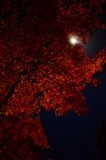 Fall Super Moon by treenbebe, photography->skies gallery