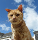 isle of man cat sanctury by corsa1, photography->pets gallery