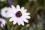 Bee by elektronist, photography->macro gallery
