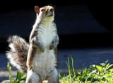 Look At ME!! by braces, photography->animals gallery