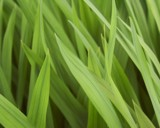 Grasses by Morat, abstract gallery