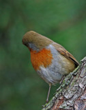 Awww by biffobear, photography->birds gallery