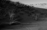 dunescape in B&W by solita17, Photography->Textures gallery