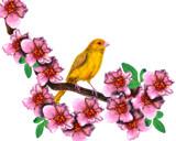 Bird & Blossoms by vangsdesign, illustrations->digital gallery