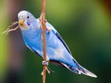 p1 by kodo34, Photography->Birds gallery