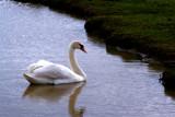 Grace by Rokh, Photography->Birds gallery