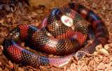 last breath by Zeniac, photography->reptiles/amphibians gallery