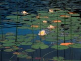 Waterlilies by ppigeon, abstract gallery