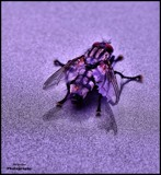 The Fly by Dunstickin, photography->insects/spiders gallery
