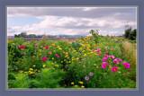 Zeeland in Bloom 07, Borderflowers, by corngrowth, Photography->Landscape gallery