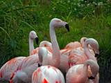 Hen Club by biffobear, photography->birds gallery