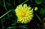 Mini Sun D by tigger3, photography->flowers gallery