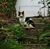 For Tigz by biffobear, photography->pets gallery