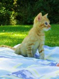Intrigued by liesareforeverx, photography->pets gallery