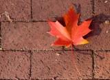 Red Leaf on Brick Sidewalk by Ronnie_R, Photography->Still life gallery