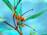 Orange II by Samatar, Photography->Nature gallery
