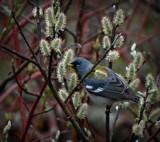 Bird 114 by picardroe, photography->birds gallery