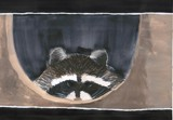 Peeking Prowler by plantprincess, illustrations->traditional gallery