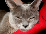 I WAS Asleep! by braces, photography->pets gallery