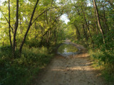 Country Lane by debblor, Photography->Landscape gallery