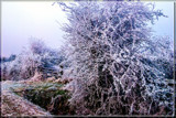 Winter A Couple Of Years Ago by corngrowth, photography->landscape gallery