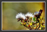 Wildflower 3 by gerryp, Photography->Flowers gallery