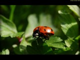 Ready for take off by krx, photography->insects/spiders gallery