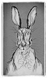Bunny Sketch by bfrank, illustrations gallery