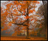 A Foggy Morn by ccmerino, Photography->Landscape gallery