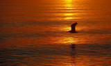 seagull over a vermilion sea by solita17, Photography->Water gallery