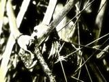 rusty spokes by TRACYJTZ, Photography->Macro gallery