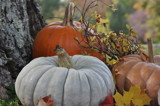 fall harvest by fivepatch, photography->still life gallery