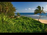 2 palms near haena beach park by jeenie11, Photography->Shorelines gallery