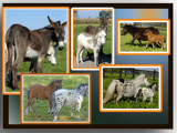 It's a donkey's world by s0050463, Photography->Animals gallery