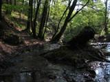 Broceliande Forest III by jesouris, Photography->Landscape gallery