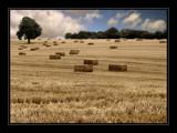 Autumn Cut by Mannie3, Photography->Landscape gallery