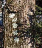 Tree Buttons by jerseygurl, photography->nature gallery